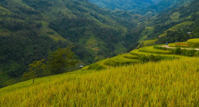 Thực tế: Ngoài các thành phố lớn như Hà Nội, Sài Gòn, không khí ở Việt Nam rất trong lành. Ở làng quê, du khách sẽ được hít thở khí trời sạch sẽ bên các cánh đồng lúa xanh tươi. Ảnh: Kiều Dương.