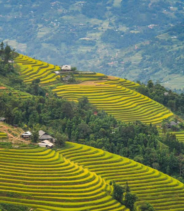 Ruộng bậc thang trên con đường dẫn lên xã Hồ Thầu, nằm cách thị trấn Vinh Quang - trung tâm huyện Hoàng Su Phì khoảng 30 km.