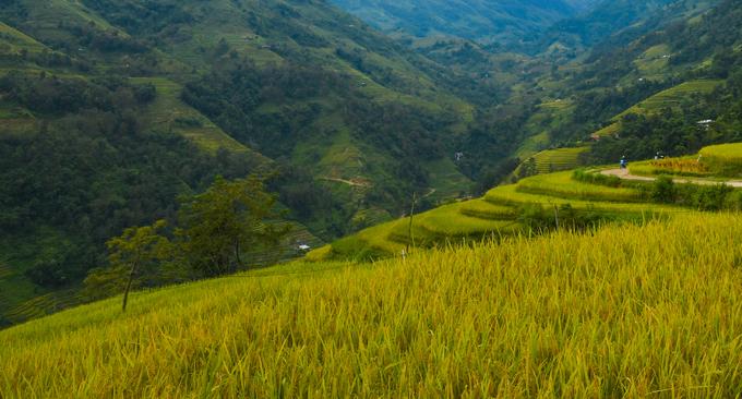 Hoàng Su Phì có địa hình chia cắt mạnh bởi núi cao, độ dốc lớn. Ruộng bậc thang là hình thức canh tác nông nghiệp thích nghi với điều kiện tự nhiên của con người nơi đây.