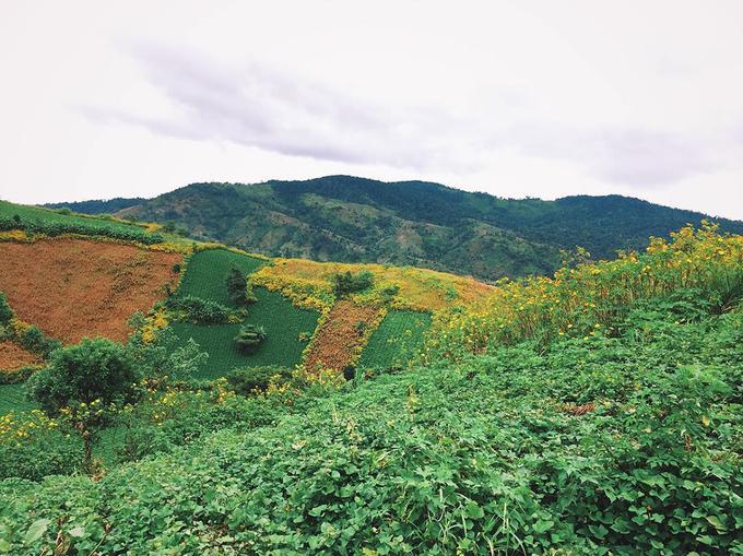 Chư Đăng Ya  Núi lửa Chư Đăng Ya cách trung tâm thành phố Pleiku khoảng 30 km về hướng đông bắc. Ngọn núi lửa đã ngủ yên hàng triệu năm này còn thu hút đông đảo người yêu thích thiên nhiên bởi nét hoang sơ của rừng núi. Ảnh: @dongtranthe.