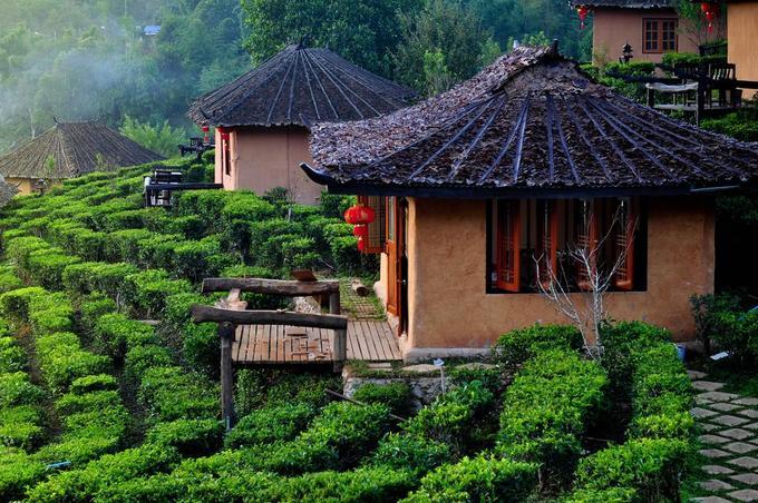 Các resort hầu hết đều xây kiểu bungalow riêng biệt, lợp mái lá mát vào mùa hè, ấm vào mùa đông, trải dài trên sườn đồi, xen lẫn giữa đồi chè tươi mát. Tuy nhiên, do số phòng ít nên nơi này thường hết phòng vào các dịp lễ Tết.