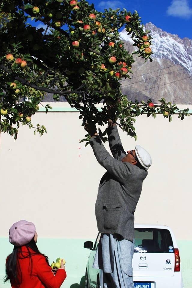 Ở Hunza, người dân trồng cây ăn trái rất nhiều, đặc biệt họ không sử dụng bất cứ loại phân bón hay thuốc hóa học nào. Trong lúc dừng chân bên đường, cả đoàn chạy lên đồi để chụp ảnh cây táo này. Bác chủ nhà tốt bụng nhìn thấy ngay lập tức bắc ghế lên hái rất nhiều táo tặng nhóm du khách Việt.