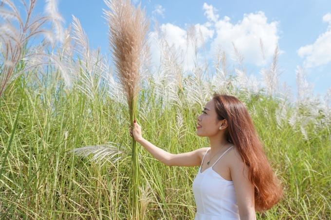 """Tô Ái Diễm (27 tuổi) đến chụp ảnh với hoa lau từ sáng sớm. Cô từng chụp ảnh ở đồng cỏ lau giữa sông Trà Khúc năm trước. """"Lau có vẻ đẹp giản dị, dân dã mà em rất thích. Năm nay em tranh thủ chụp bộ ảnh trước khi hết mùa. Làm bộ ảnh không khó vì hoa lau tràn ngập khắp nơi"""", cô nói."""