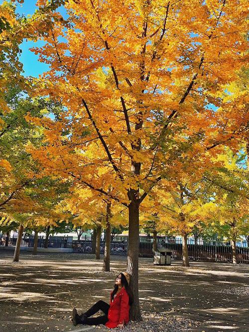Không chỉ có Hàn Quốc hay Nhật Bản mà Trung Quốc cũng là quốc giá Đông Bắc Á có mùa thu lãng mạn. Chẳng cần phải tìm tới địa danh nào quá tiếng tăm, bất cứ đâu cũng có thể cho bạn một khung hình sống ảo.