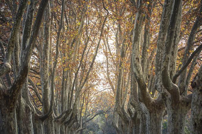 Mỗi mùa, nơi đây mang một vẻ riêng. Tuy nhiên mùa thu là thời điểm hút khách nhất bởi cây dọc hai bên đại lộ Wutong dẫn vào cung điện thay lá vàng lá đỏ rực rỡ, làm bạn như đang lạc giữa một bức tranh cổ tích. Đợi đến mùa đông, cả khu đồi phủ một màu trắng xóa của tuyết.