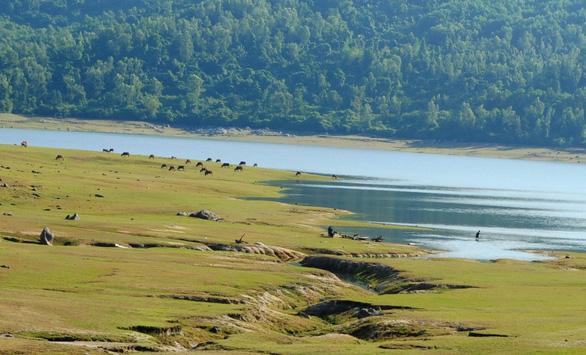 Bãi bồi, dòng nước, rừng thông đẹp như bức tranh thủy mặc - Ảnh: LÊ TRUNG