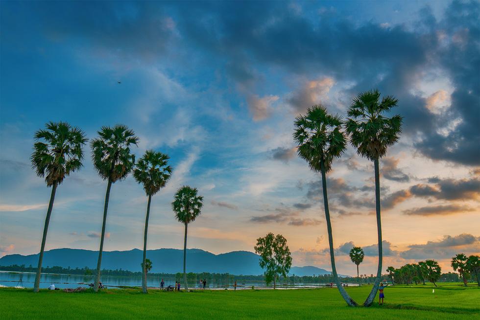 Du khách có thể dễ dàng bắt gặp hình ảnh cây thốt nốt khi đến Tịnh Biên, An Giang - Ảnh: MINH TRUNG