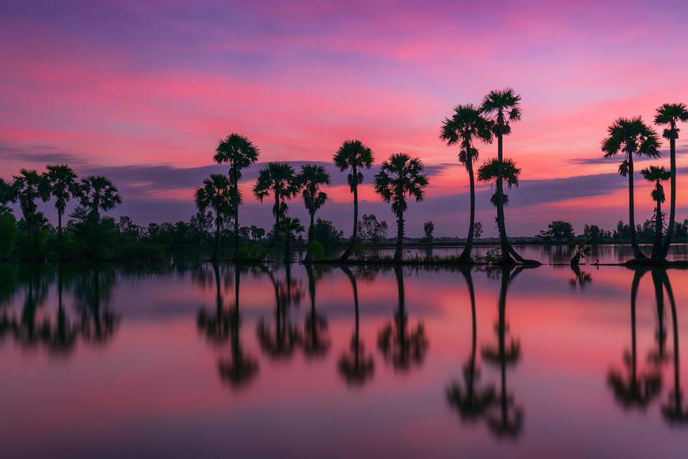 Hàng cây thốt nốt huyền thoại trở thành đề tài sáng tác ảnh của các nhiếp ảnh gia - Ảnh: MINH TRUNG