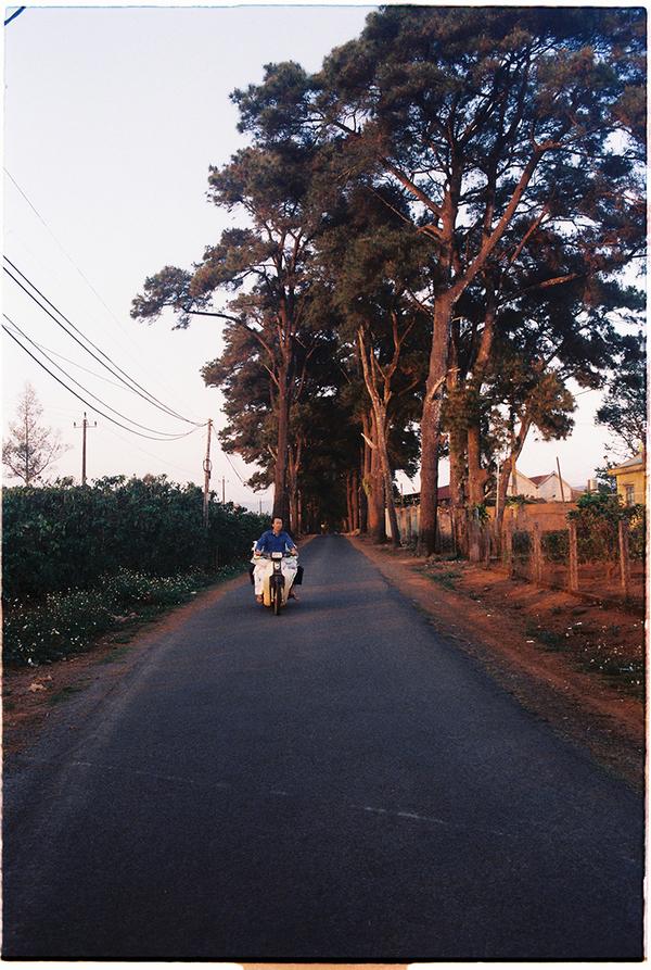 Dẫn vào đồi chè có một con đường nhỏ, hai bên có hàng thông lá kim. Con đường được nhiều bạn trẻ gọi là đường Hàn Quốc bởi khung cảnh lãng mạn.