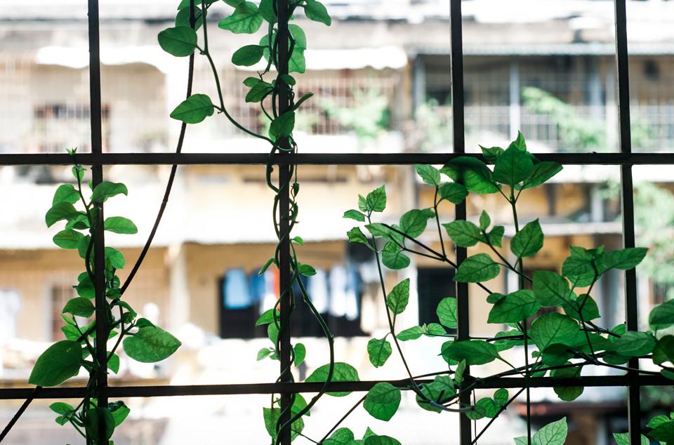 Góc xưa cũ của Hà Nội là điểm hấp dẫn những tay máy, là nơi check-in đang được giới trẻ yêu thích, là nguồn cảm hứng của những trang mạng xã hội viết về tình yêu, cuộc sống...