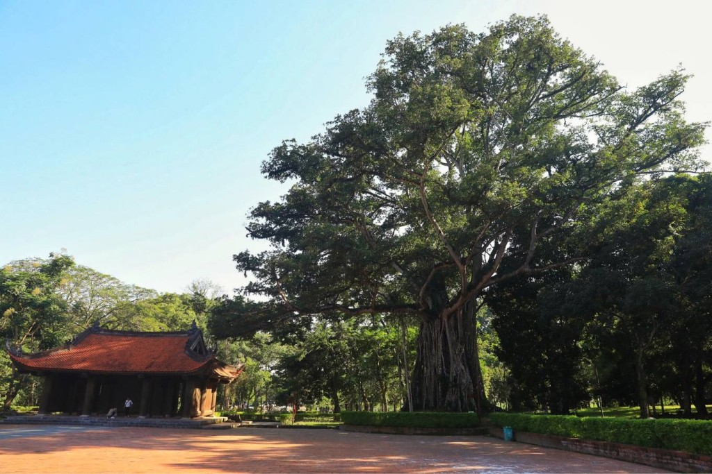 """Khu di tích còn lưu giữ nét đẹp của không gian Việt với """"cây đa, giếng nước, sân đình"""". Bên phải sân rồng (còn gọi là sân chầu) là cây đa thị hàng trăm năm tuổi, có kích thước chục người ôm mới xuể."""