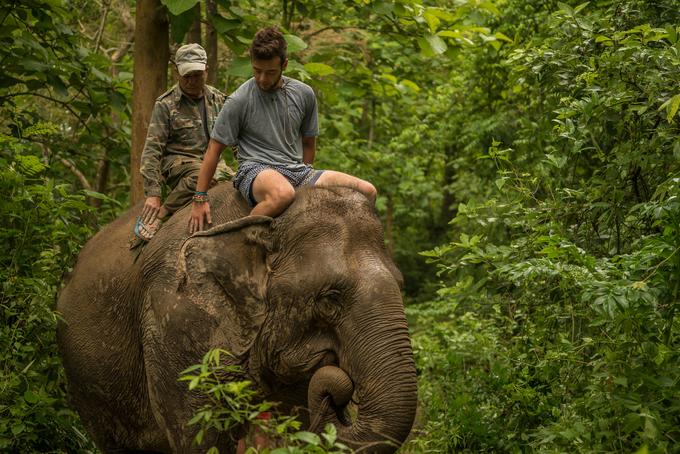 """Lào được biết đến với tên gọi """"xứ sở triệu voi"""". Cụm từ này được dịch từ Lan Xang (hoặc Lan Xan) - tên của vương quốc Lào trong thế kỷ 14. Tuy nhiên ngày nay, số lượng voi ở Lào đã giảm đi đáng kể, chỉ còn khoảng 1.000 con. Ảnh: Elephantvillage-laos."""