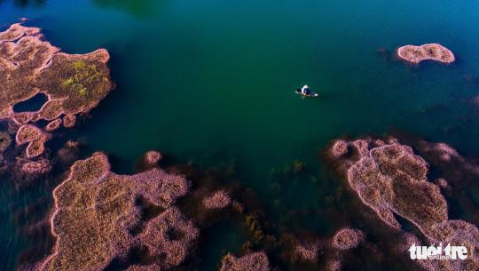 Hồ nước có tảo hồng nở hoa nằm ở vùng ngoại ô thuộc xã Đam B'ri (TP. Bảo Lộc, tỉnh Lâm Đồng) - Ảnh: LÊ VĂN CƯỜNG