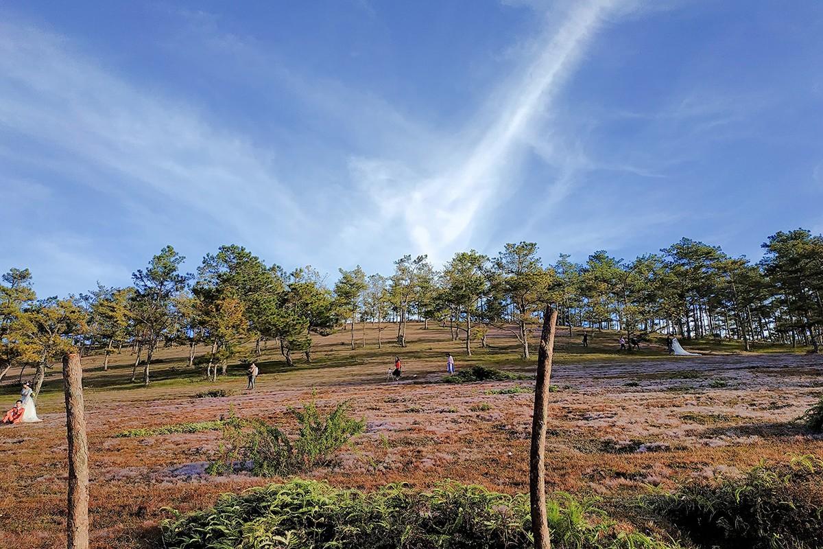 Giống cỏ này được biết đến nhiều nhất ở Bắc Mỹ, Trung Quốc. Tại Việt Nam, Đà Lạt là một trong số ít nơi xuất hiện loại cỏ này.