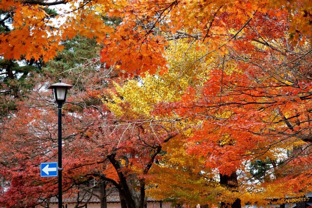 Khắp mọi nẻo đường, lá cây biến chuyển từ màu xanh thẫm sang vàng ươm rồi hóa thành đỏ rực sẽ cho bạn cảm giác thanh bình pha lẫn thích thú.