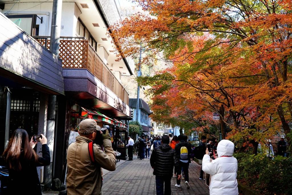 Những hàng cây lá vàng, đỏ trên khắp các con đường, cánh rừng, khu du lịch là cảm hứng sáng tác cho nhiều nhiếp ảnh gia và du khách.