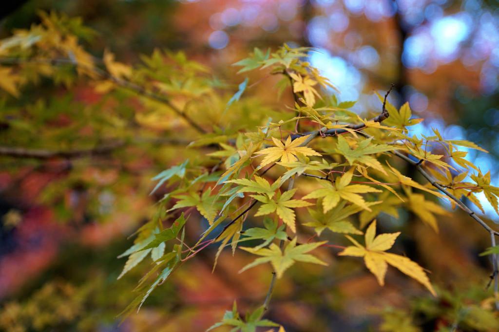 Dọc các con đường ở vùng quê bình yên này đều có cây phong. Tiết trời se lạnh, cảnh sắc hữu tình, Tochigi rất thích hợp cho người muốn nghỉ dưỡng.