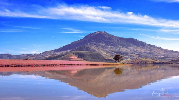 Thảm cỏ hồng soi bóng mặt hồ Suối Vàng, huyện Lạc Dương, tỉnh Lâm Đồng - Ảnh: PHẠM NGỌC THẠCH