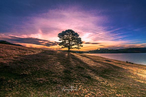 """Đồi cỏ hồng cạnh """"cây cô đơn"""" nổi tiếng ở khu vực Đan Kia - Suối Vàng - Ảnh: PHẠM NGỌC THẠCH"""