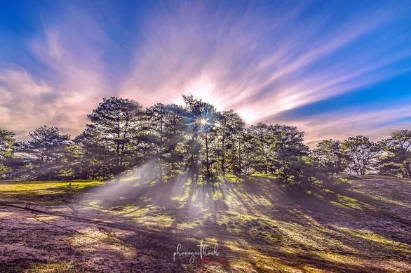 Đồi cỏ hồng khoe sắc thắm bên dưới tán hàng thông xanh mát ở khu vực Đan Kia - Suối Vàng - Ảnh: PHẠM NGỌC THẠCH