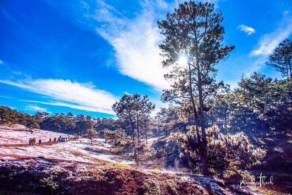 Du khách nhộn nhịp du ngoạn đồi cỏ hồng khu vực Thung lũng vàng - Ảnh: PHẠM NGỌC THẠCH