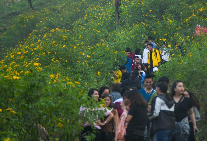 Anh Thắng, khách tham quan đến từ thị xã Sơn Tây (Hà Nội) cho biết đoạn đường từ cổng soát vé lên đến khu vực có hoa chỉ khoảng 4 km nhưng đoàn anh phải mất hơn một tiếng mới lên đến nơi vì quá đông.