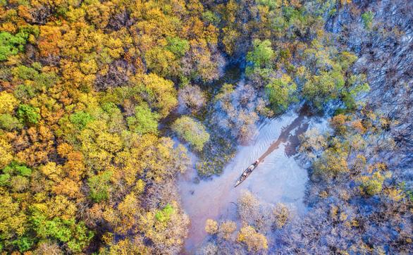 Rừng vàng rực khi mùa thu đến