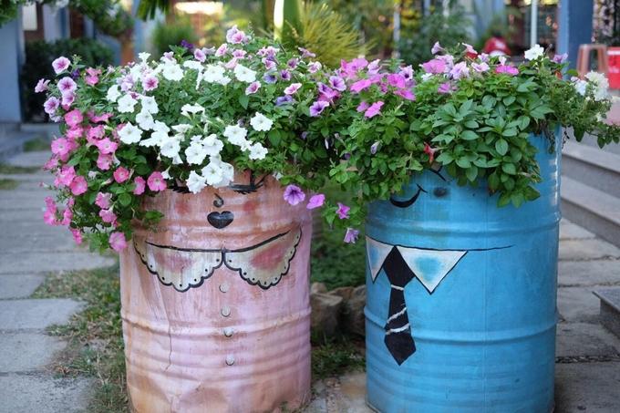 Dạ yến thảo không nở rực rỡ, nổi bật mà hoa chen với lá xanh, rất bình dị, gần gũi. Một số chậu hoa ở Yours được tái chế từ thùng sơn cũ, khoác lên chiếc áo hoạt hình trông đáng yêu.