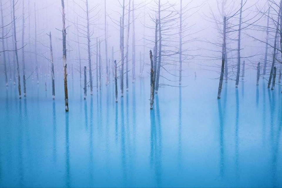Blue Pond: Hồ nước có màu xanh độc đáo và những thân cây ấn tượng này nằm ở tỉnh Hokkaido. Trên thực tế, đây là hồ nhân tạo thuộc hệ thống kiểm soát xói mòn, được thiết kế để bảo vệ khu vực khỏi dòng bùn quanh núi lửa Tokachi. Màu xanh của nước hồ là do khoáng chất tự nhiên hình thành. Ảnh: Zekkeijapan.