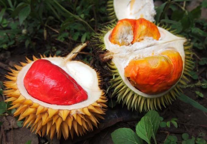 """Sầu riêng được mệnh danh là """"vua trái cây"""" ở Malaysia với vị thơm ngon hơn hẳn các nước khác. Quốc gia này còn sở hữu sầu riêng ruột đỏ đặc trưng hiếm thấy. Tuy nhiên, do khá """"nặng mùi"""", loại quả này thường bị cấm tại các khách sạn lớn và vận chuyển theo đường hàng không. Ảnh: Under The Angsana Tree."""