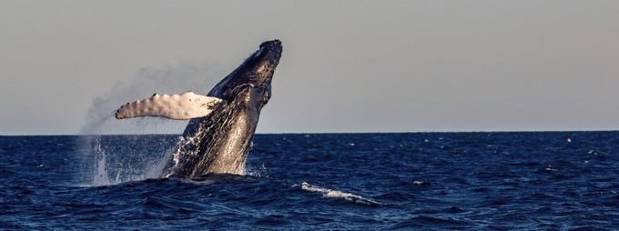 Greenland: Cá voi tươi và hải cầu nhồi  Greenland luôn có một vài món ăn kỳ lạ trong dịp lễ. Mattak là thịt cá voi sống được thái mỏng. Một món ăn khác là chim biển nhồi trong da hải cẩu, được ủ lên men trong nửa năm. Ảnh: Tim Vollmer Photography.