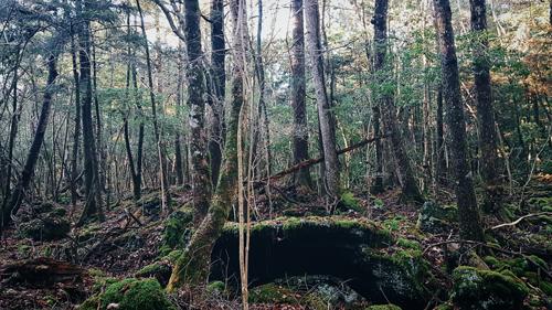 Nhiều bộ phim nổi tiếng đã lấy bối cảnh để quay ở đây như Sea of Trees, The Forest...