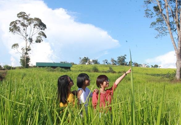 Đồng cỏ xanh mênh mông yên bình