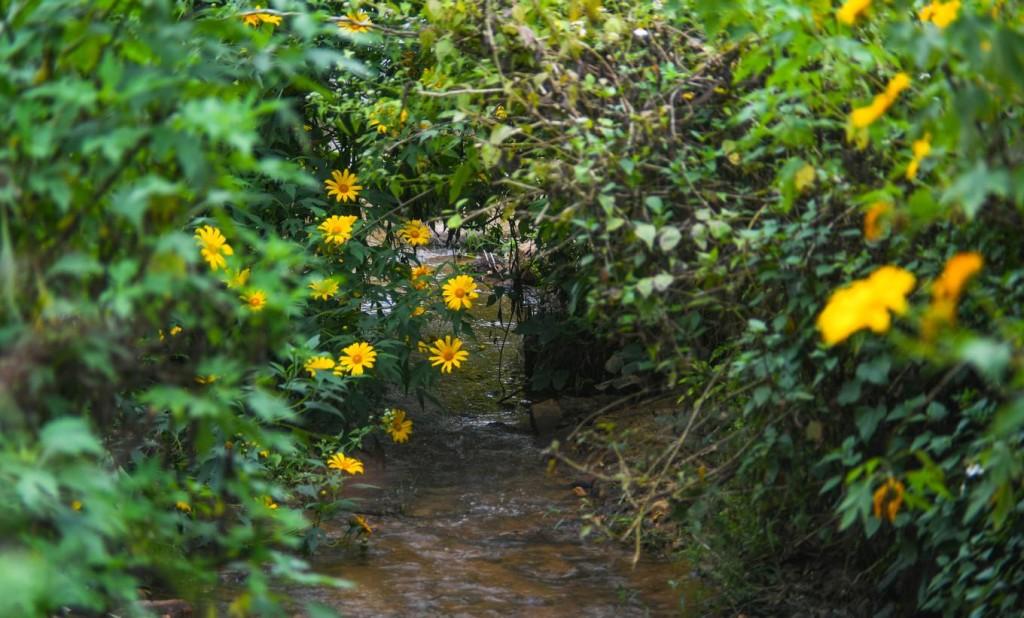 Dòng suối chảy ra đường quốc lộ 279B từ khu di tích Sở Chỉ huy cũng điểm xuyết những bông hoa có màu nắng.