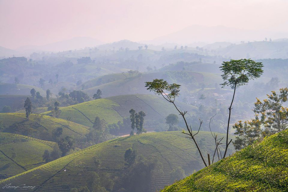 Khung cảnh yên bình với những đồi chè trải dài - Ảnh: PHẠM HOÀNG CƯƠNG