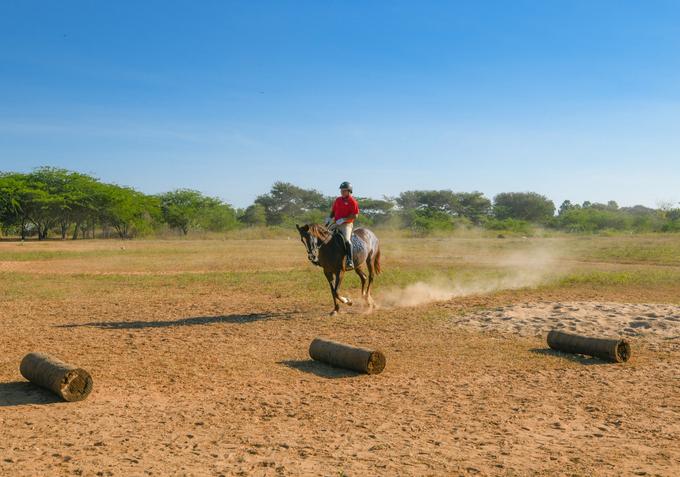 Sau khi đeo các trang bị an toàn, du khách phải dành thêm 15 phút để xem hướng dẫn cơ bản cách điều khiển ngựa rẽ các hướng, chạy và dừng… Bạn cũng được học cách kéo dây cương và cử động phần hông khi cưỡi ngựa.
