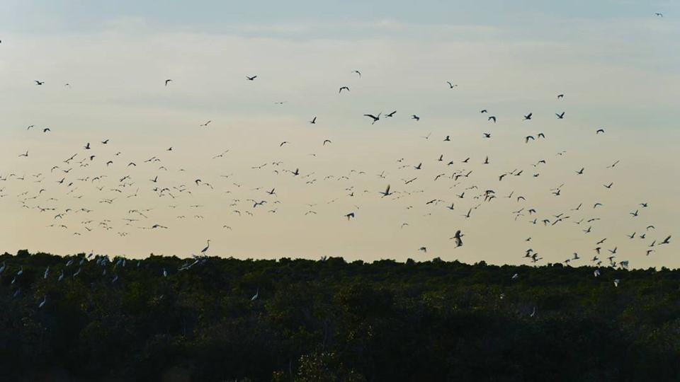 Vườn quốc gia Tràm Chim (Đồng Tháp): Vườn Quốc gia Tràm Chim thuộc huyện Tam Nông, tỉnh Đồng Tháp, có diện tích đất ngập nước lớn nhất vùng Đồng Tháp Mười. Vườn Tràm Chim được công nhận là khu dự trữ sinh quyển thứ 4 của Việt Nam và thứ 2.000 của thế giới với hơn 232 loài chim với nhiều loại quý hiếm như công đất, giang sen, điên điển, cò quắm, cò thìa… Đặc biệt, vườn là nơi cư ngụ của sếu đầu đỏ - loài chim có trong danh sách đỏ thế giới về những loài có nguy cơ tuyệt chủng. Nơi đây là điểm đến lý tưởng cho những du khách yêu thiên nhiên, thích khám phá. Ảnh: Kyleledotnet.