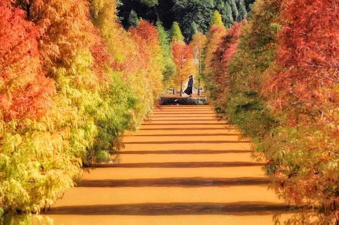Cây lá kim ở Nanzhuang (Miaoli), phía Tây Đài Loan cũng trở thành điểm check-in ưa thích của các bạn trẻ dù khu vườn này không rộng. Đây là điểm dã ngoại lý tưởng với địa hình đồi núi bao bọc xung quanh. Nếu không có nhiều thời gian, bạn có thể book tour đi về trong ngày từ Đài Bắc.
