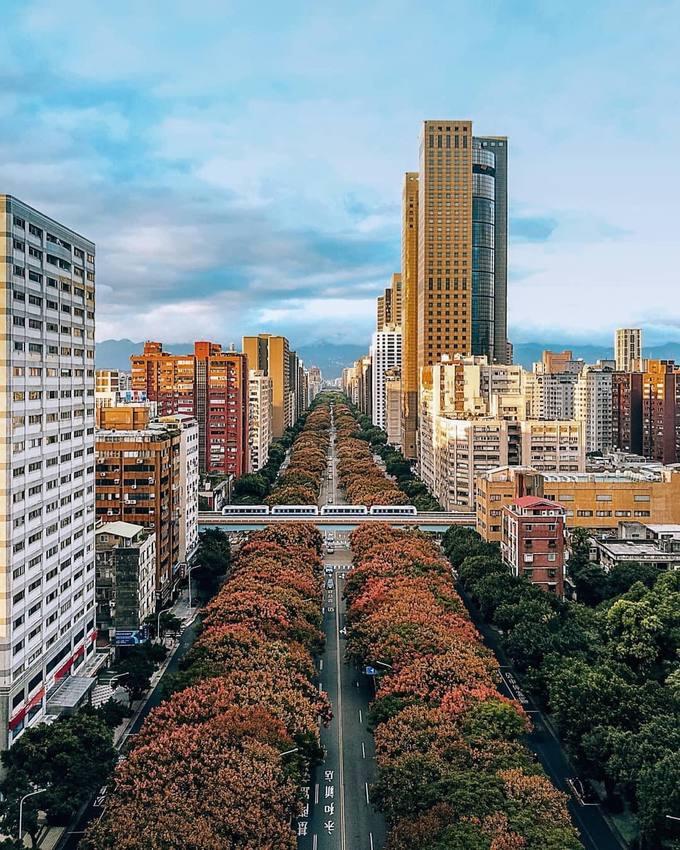 Còn tại Đài Bắc, những con đường rợp bóng cây ở khu trung tâm cũng chuyển màu. Thời tiết dễ chịu, ban ngày trời mát, đêm hơi lạnh cho bạn thoải mái dạo phố ăn vặt. Thu Đài Loan không nổi bật như Hàn, Nhật hay Trung Quốc nhưng chắc chắn sẽ là điểm đến khá hay vào những ngày cuối năm.