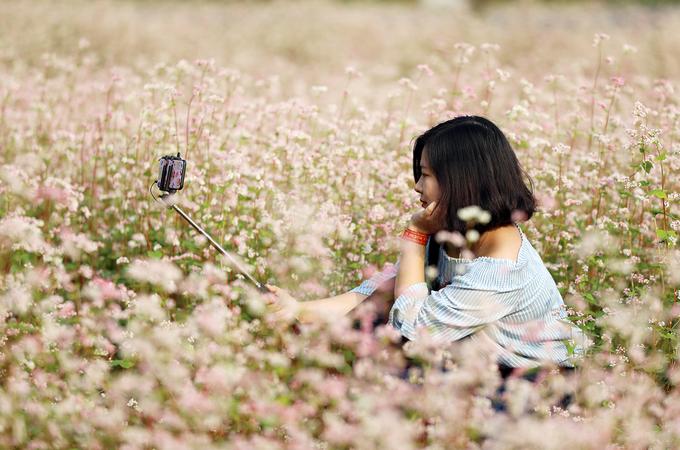 Loài hoa của trời đất này đã trở thành nguồn cảm hứng cho nhiều bạn trẻ, những người đam mê nhiếp ảnh và sáng tạo nghệ thuật tìm đến để không phải đi quá xa lên tận vùng cao để hòa mình trong cánh đồng hoa đang trong thời điểm nở rộ.