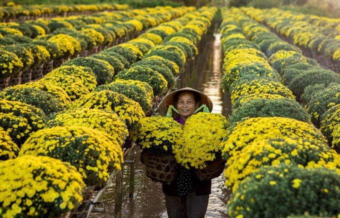 Thành phố Sa Đéc bên dòng sông Mekong là gợi ý không tồi để bạn thực hiện bộ ảnh xuân. Đây là một trong những vựa hoa lớn nhất cả nước, đặc biệt là Làng hoa Sa Đéc nằm ở xã Tân Quy Đông luôn nhộn nhịp như lễ hội vào thời điểm trước Tết Âm lịch. Không chỉ có hoa trồng trên giàn, dưới đất như những nơi khác mà điều thú vị là kiểu trồng hoa trên các thửa ruộng, bên dưới là nước khiến bạn phải chèo ghe nhỏ, len lỏi giữa những luống hoa, tạo nên bức tranh thôn quê rất đẹp. Ảnh: Vũ Minh Quân