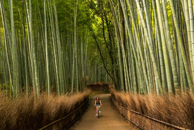 Nếu bạn từng có lúc tìm kiếm trên mạng danh sách những nơi nhất định phải đến trong đời hay các khu rừng đẹp nhất thế giới, có thể bạn đã bắt gặp hình ảnh rừng tre Arashiyama. Đây là điểm du lịch không thể bỏ lỡ khi đến Kyoto (Nhật) với hàng triệu lượt khách tham quan mỗi tháng. Ảnh: Duff's Suitcase.