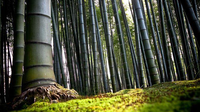 """""""Một cảm giác lạ"""" là yếu tố tiếp theo thu hút du khách tìm đến rừng tre Arashiyama. Chris Rowthorn, tác giả cuốn cẩm nang Lonely Planet Kyoto, nhận xét: """"Có lẽ bạn đã nhìn thấy nhiều bức ảnh về rừng tre Arashiyama, nhưng không có hình nào có thể ghi lại cảm giác khi đứng ở đây"""". Ảnh: Gustavo Barrera."""