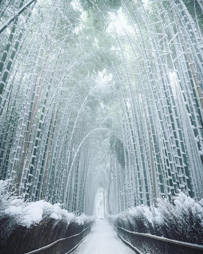 """Mùa du lịch cao điểm ở Arashiyama vào khoảng đầu tháng 4 và nửa cuối tháng 11 hàng năm, tương ứng với thời điểm hoa anh đào đua nở và sắc lá chuyển màu rực rỡ trong tiết trời thu. Một điểm nữa khiến nơi đây trở nên đặc biệt với cả người dân Nhật Bản và du khách nước ngoài là vẻ đẹp thay đổi theo mùa. Burcu, blogger du lịch, thừa nhận rằng cô đã cảm thấy """"ghen tị với việc mọi người được nhìn thấy rừng tre Arashiyama phủ trắng tuyết trong mùa đông"""". Ảnh: mantaroq."""