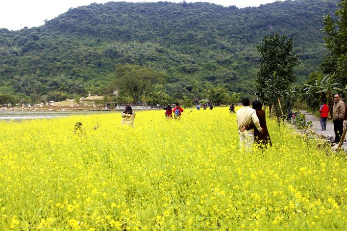Vườn hoa cải rộng hàng nghìn mét vuông cách trung tâm Ninh Bình khoảng 12 km, toạ lạc trên đường vào vườn chim Thung Nham. Đây cũng là vùng lõi của danh thắng Tràng An.