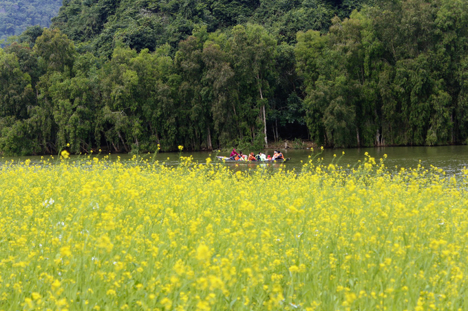 Vườn hoa kéo dài khoảng 500 mét. Du khách có thể đi bộ từ bên ngoài vào rồi từ từ tham quan. Nếu dùng thuyền, bạn được dịp quan sát khung cảnh hoa nở vàng rực trên nền non nước hữu tình.