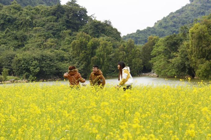 Dịp Tết Dương lịch vừa qua, thời tiết ở Ninh Bình rét lạnh nhưng đã có rất nhiều khách tham quan đến đây. Theo chủ vườn, có ngày vườn đón cả nghìn lượt khách, chủ yếu là các nhóm bạn trẻ và gia đình.