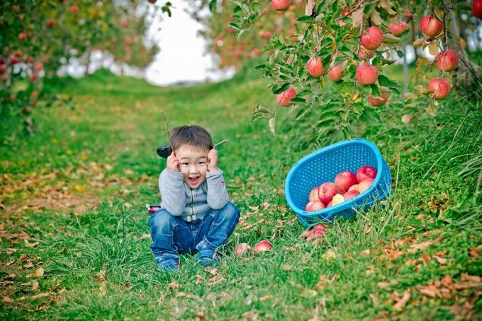 Đây là loại táo đường, mọng nước, ngọt như mật trông rất hấp dẫn. Bạn được phép hái thỏa thích, có thể thưởng thức ngay lập tức để tận hưởng trọn vẹn độ tươi ngon. Vì thế, nếu quá chán với cảnh đô thị xô bồ, mùa hoa anh đào, mùa lá đỏ luôn đông nghẹt du khách thì vườn táo ở Nagano là một gợi ý không tồi cho chuyến đi đến xứ sở mặt trời mọc của bạn. Gói thêm vài thứ đồ ăn nhẹ là đủ để có một ngày picnic vui hết ý.