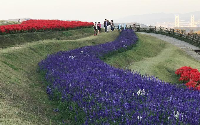 Công viên tràn ngập sắc hoa quanh năm, mỗi mùa có những loài hoa đặc trưng như mùa xuân có hoa cải vàng, mùa hè có hoa hướng dương...