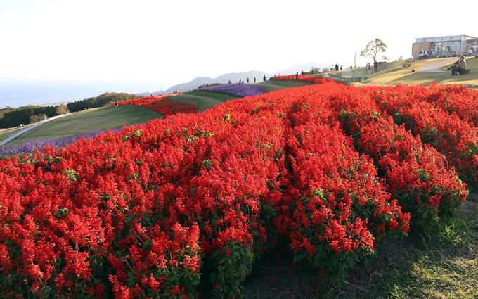 Mùa xuân, công viên trải dài những khóm hoa salvia xanh, đỏ (một loại khá giống hoa oải hương), cánh bướm, hoàng anh...